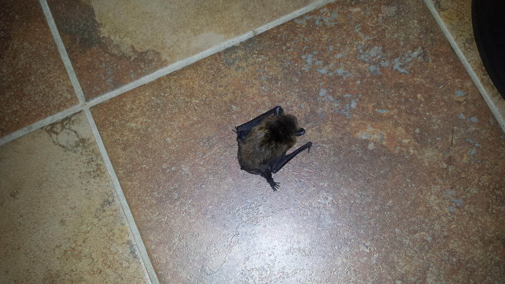 bat on the floor