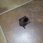 bat on the floor
