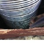 bat in the chimney