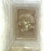 raccoon in the fireplace